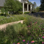 Colorado Springs xeriscape design