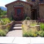 winter, plants, grasses, design, interest