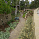 Soil Cement pathway landscaping