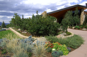 A xeriscape garden will require a lot less time to maintain in comparison with a high-water use garden